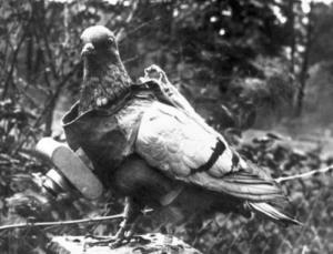 Camera, Dove, Tactics, History