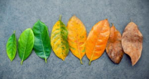 Ecomomic seasons